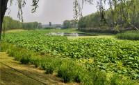 20170528 游于北京通州大运河森林公园